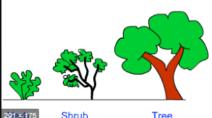 Difference between Herbs, Shrubs and Trees