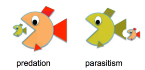 Difference between Predation and Parasitism