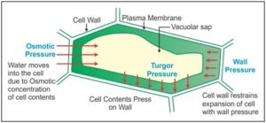 Difference between Turgor Pressure and Wall Pressure