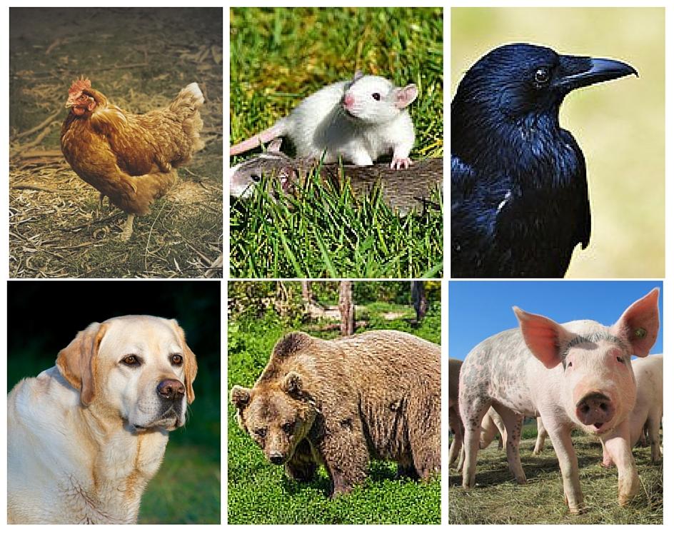 Difference Between Herbivores, Carnivores and Omnivores