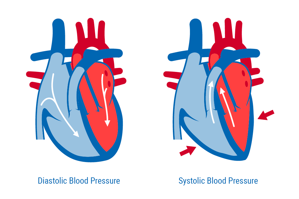 Difference Between Systolic and Diastolic Blood Pressures