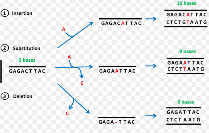 difference between point and frameshift mutations